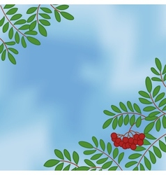 Background with rowanberry on sky vector