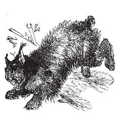 Canada lynx vintage vector