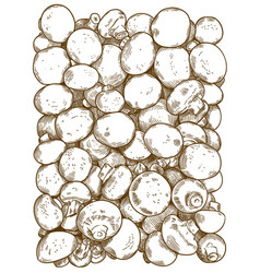 engraving of champignons vector image