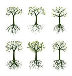 green spring trees with leaves vector image