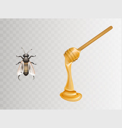 Honey on dipper and bee realistic vector