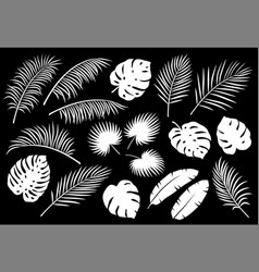 set of white palm leaves vector image