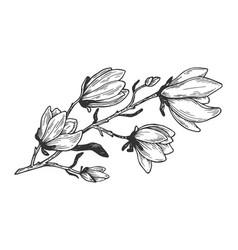 Magnolia branch engraving vector