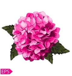Pink realistic hydrangea lavender vector