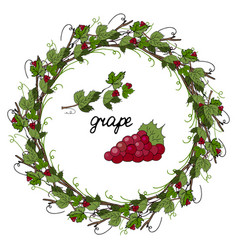 Wreath of grape leaves and grapes on a white backg vector