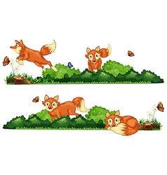 Foxes resting in the field vector
