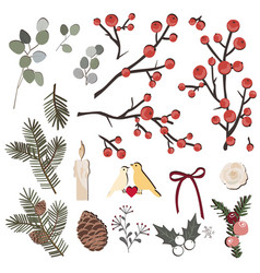 hand drawn herbal set with pine branches vector image