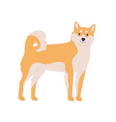 Japanese dog akita or shiba inu breed friendly vector