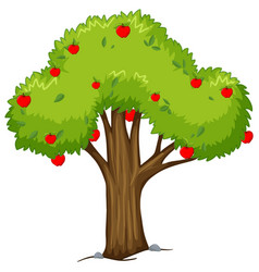 apple tree with red apples vector image vector image