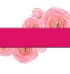 Pink Rose Banner vector image