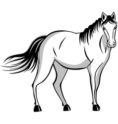 Quietly standing horse vector image vector image
