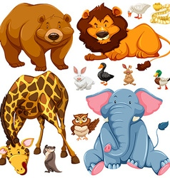 Different types of wild animals vector image