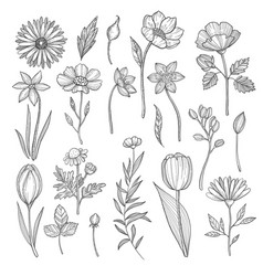 hand drawn plants pictures isolate vector image