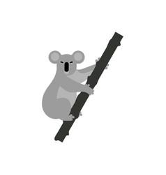 Koala bear vector