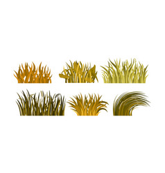 Set of different tufts of yellow and brown grass vector