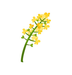 Small bright-yellow flowers on green stalk floral vector