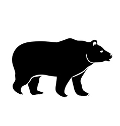 bear isolated on white vector image vector image
