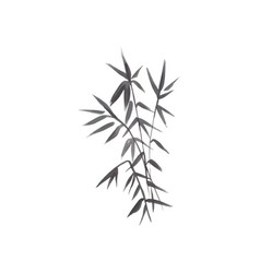 bamboo plant isolated vector image