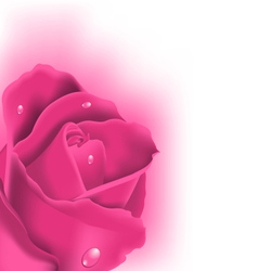 Celebration card with pink rose copy space for vector image