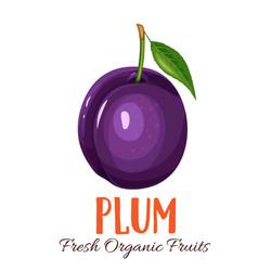 Plum vector