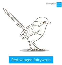 Red winged fairywren bird coloring book vector