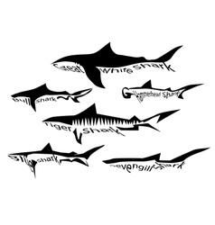 Shark species vector