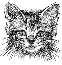 sketch portrait a small domestic kitten vector image