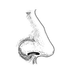 human biology organ anatomy vector image