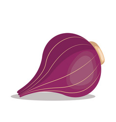 red onion nutrition healthy image vector image