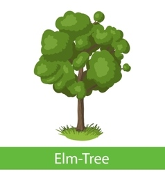 Elm-Tree cartoon icon vector image