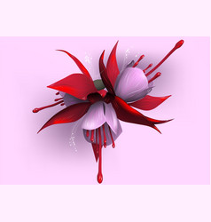 fuchsia on pink background vector image