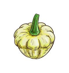White squash isolated pattypan squash vegetable vector