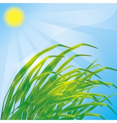 Spring background with fresh grass vector image vector image