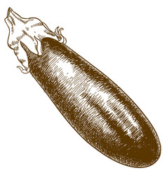 Engraving of eggplant vector