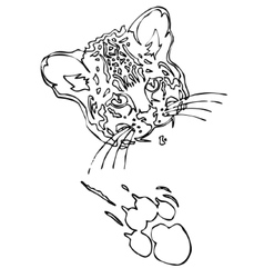 Leopard puma or jaguar face with print of paw vector