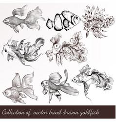 set filigree drawn goldfish in vintage style vector image