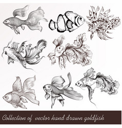 set of filigree drawn goldfish in vintage style vector image