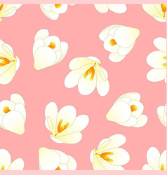 white crocus flower on light pink background vector image