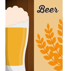 big beer glass foam with wheat leaf poster vector image