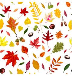 Autumn leaves acorns and chestnut seamless vector