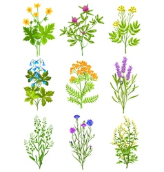 Collection Of Wild Herbs vector image