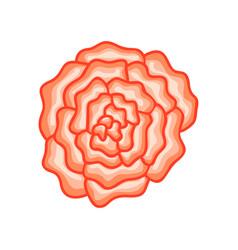 Floral botanical flower pink ornament vector
