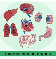 Internal organs of the human set vector