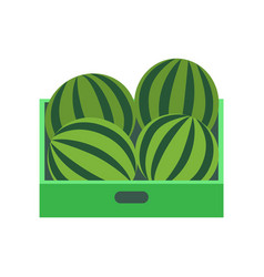 shelf with watermelons supermarket grocery store vector image