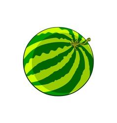 watermelon round vector image