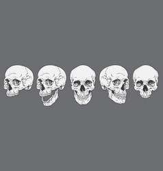Anatomically correct human skulls set isolated vector