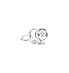 arctic fox black on white background vector image