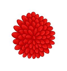 Floral botanical flower color ornament red vector