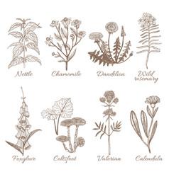 Set of medicinal plants vector
