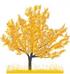 cherry tree in autumn vector image vector image